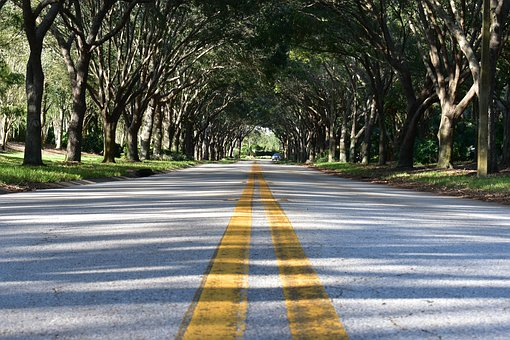 Road, Pavement, Asphalt, Path, Trees, Shelter, Shadows