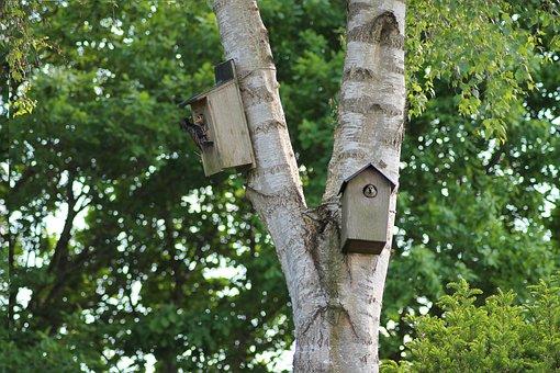 Birds, Garden Birds, Natural, Have, Summer, Denmark
