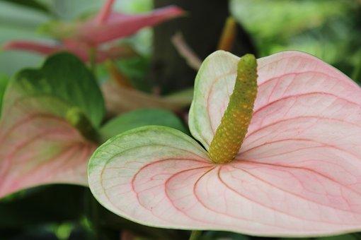Plant, Tropical, Green, Tropic, Leaf, Summer, Nature