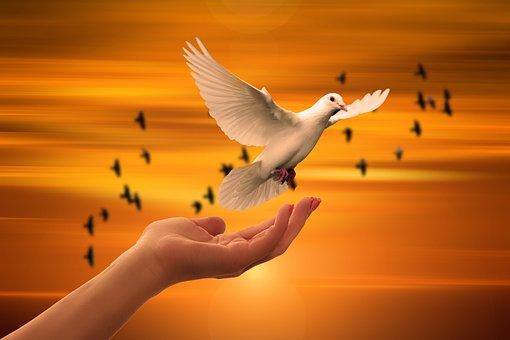 Religion, Faith, Dove, Hand, Trust, God, Pray, Prayer