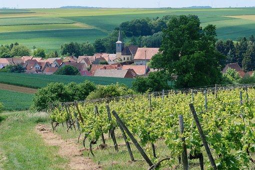 Village, Wine, Winegrowing, Vineyard, Winemaker