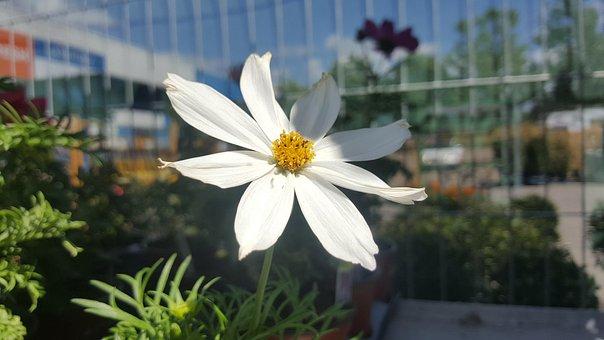 White Flower, Flower, White, Shade, Garden, Sky, Bars