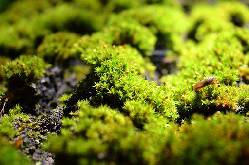 Moss, Wood, Forest, Nature, Green, Plant, Log, Macro
