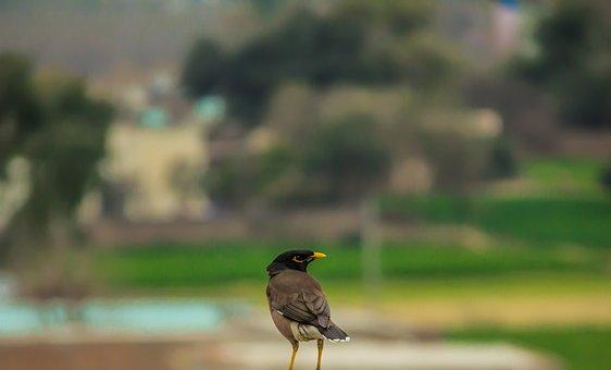 Bird, Nature, Animal, Wildlife, Wild, Beak, Feather
