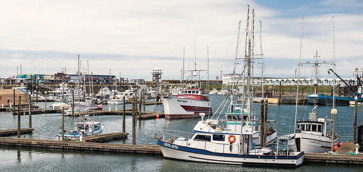 Fishing Fleet In Port, Fishing, Port, Boats, Fish