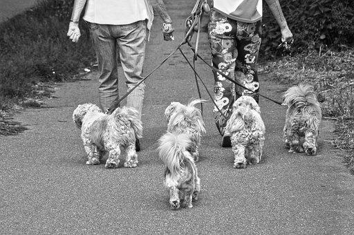 Little Dogs, Doggies, Animal, Mammal, Canine, Purebred