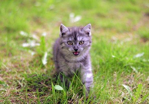 Cat, Dog, Dog And Cat, Cat Dog, Pet, Cute, Domestic