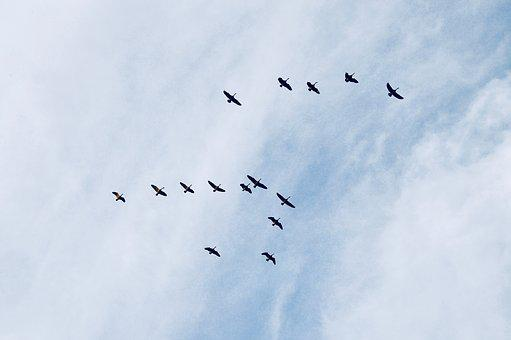 Sky, Birds, Constellation, Wing, Fly, Clouds