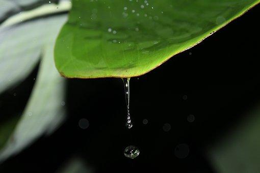 Drop, H2o, Wet, Leaf, Rain, Dew, Droplet