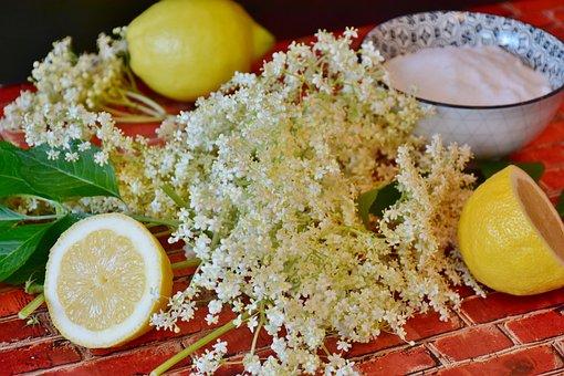 Elder, Elderflower Umbels, Lemon, Holder Bush, Fruits
