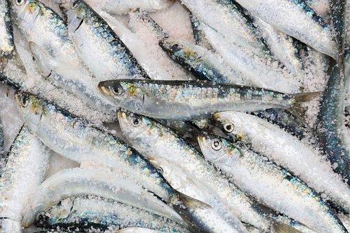 Morocco, Essaouira, Harbour, Fish, Sardine, Catch, Sale