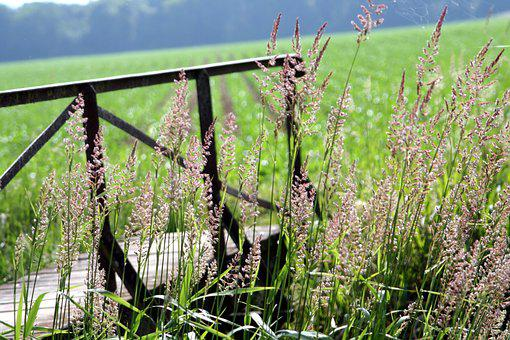 Bridge, Wood, Field, Herbs, Passage, Nature
