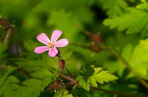 Flower, Blossom, Bloom, Star, Red, Green, Garden, Bloom