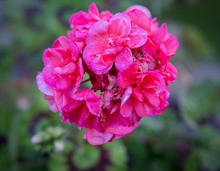 Spring, Bloom, Flower, Green, Summer, Pink, White