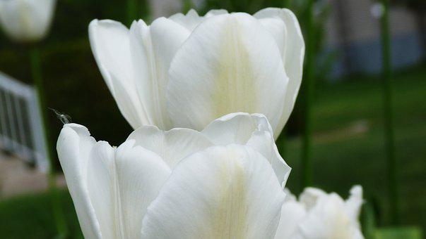 Flower, Garden, Summer, Spring, Romantic Garden, Nature