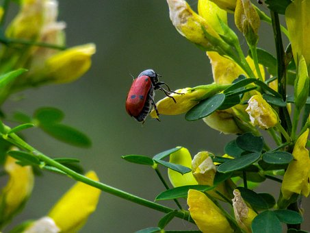 Yellow Flowers, Insect, Yellow Flower, Bug, Flower