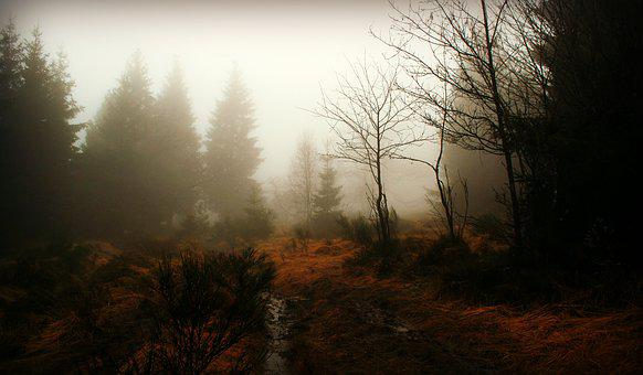 Forest, Fog, The Way Of Nature, Trees, Autumn