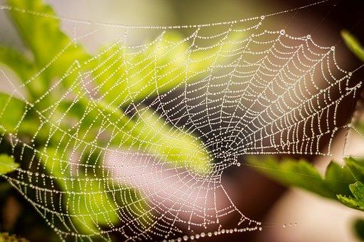 Raindrops, Green, Web, Rain, Pattern, Net, Morning, Dew
