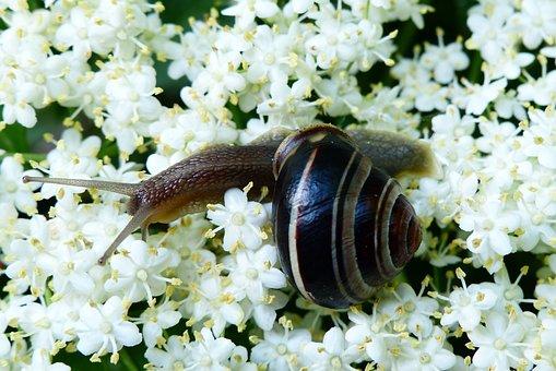 Animals, Invertebrates, Molluscs, At The Court Of