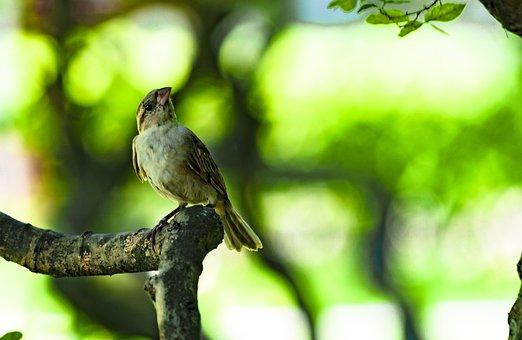 Natural, Little Birds