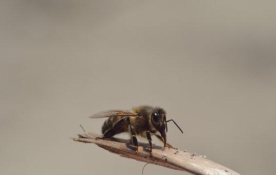 Bee, Sand, Insect, Close, Macro, Break, Proboscis