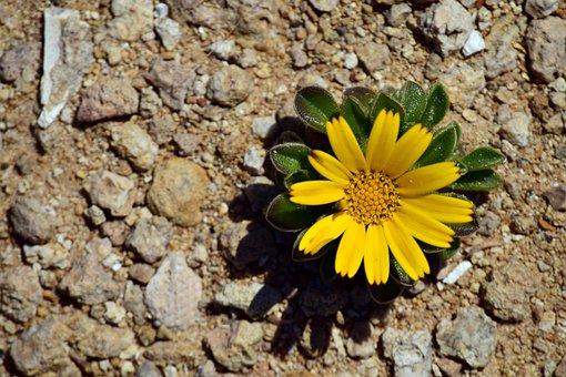 Flower, Small, Small Flower, Macro, Nature, Wild Flower