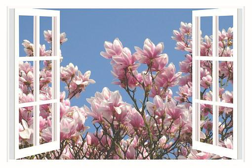 Magnolia, Magnolia Tree, Flower, Spring, Blossom, Bloom