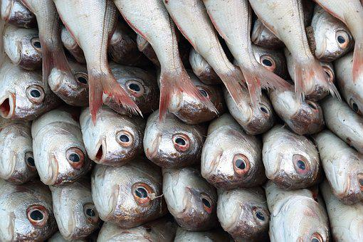 Morocco, Essaouira, Harbour, Fish, Catch, Sale, Food
