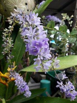 Flowers, Colors, Nature, Shrubs Flowers