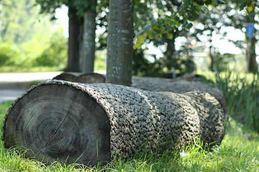 Tree Stumps, Forest, Nature, Tree, Trees, Tree Stump