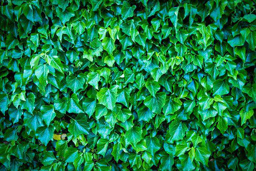 Wall, Green, Leaves, Entwine, Nature, Background