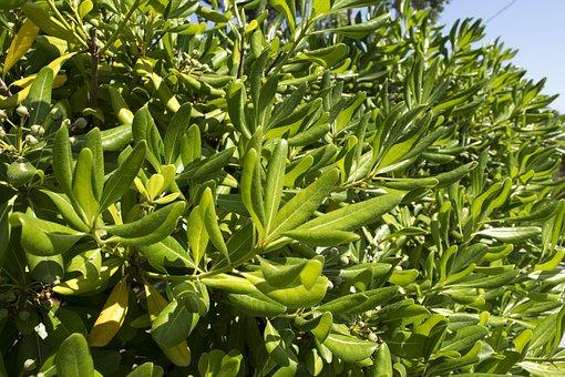 Nature, Green, Plant, Plants, Always Green, Prato