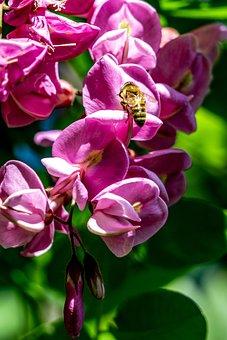 Early Summer, Purple Sophora Flower