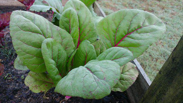 Kale, Green, Food, Vegetable, Vegetarian, Organic, Raw