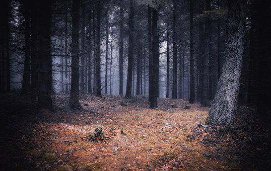 Forest, Mystery, Mood, Evening, Twilight, Scenery