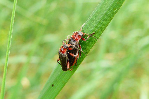 Animals, Invertebrates, Insects, The Beetle, Nature
