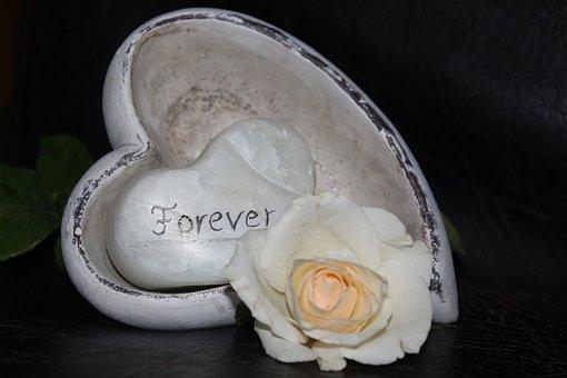 Love, White Rose, Wedding, Heart, Romantic, Roses