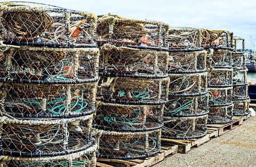 Westport Crab Pots, Crab, Crabbing, Fishing, Offshore
