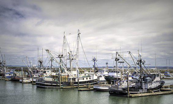 Westport Fishing Fleet, Long Line, Fishing, Port, Boat