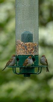 Birds, Feeder, Bird Feeder, Wildlife, Garden, Natural