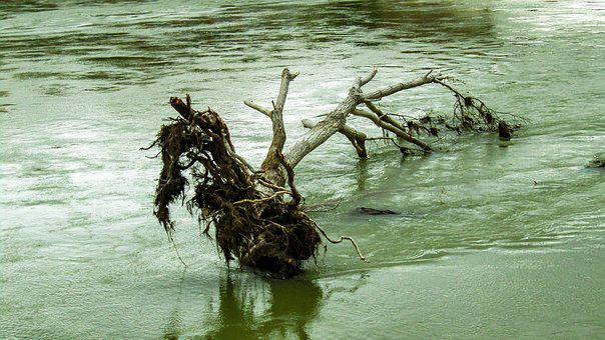 River, Trunk, Tree Trunk, Wood, Cut Trunk, Water
