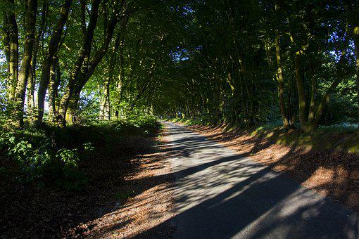 Away, Trees, Avenue, Nature, Summer