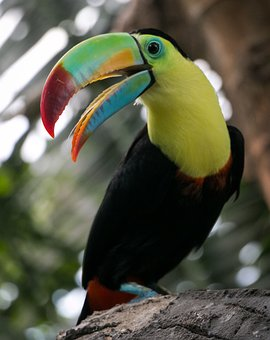Bird, Tropical, Beak, Colorful, Exotic, Bright, Jungle