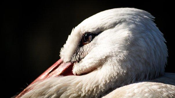 Stork, Animal, Zoo, Bird, Rattle Stork, Nature, Feather
