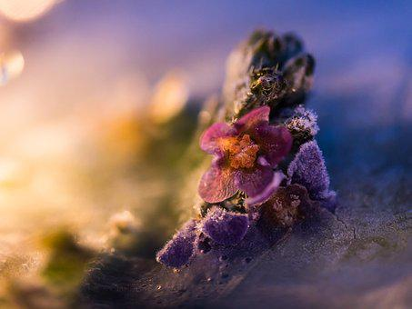Flower, Frost, Blossom, Bloom, Filigree, Plant, Garden