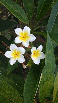 Tropical, Flower, Foliage, Summer, Blossom, Floral
