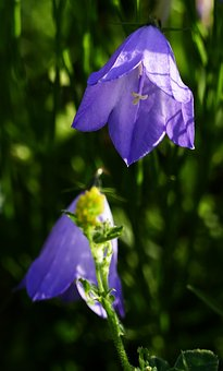 Nature, Landscape, Flower, Wild, Blue Violet, Light