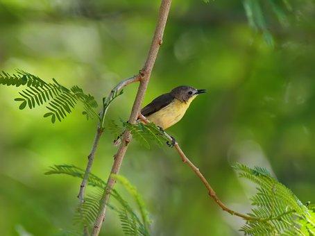 Bird, Wild, Nature, Natural, Wildlife, Animal, Branch