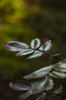 Foliage, Branch, Picnic, Summer, Spacer, Macro, Closeup