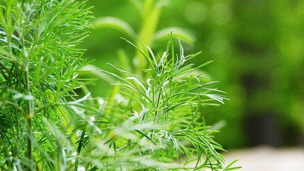 Green, Leaf, Grass, Garden, Green Leaf, Foliage